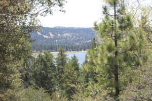 Big Bear's Woodland Trail Shares Forest Secrets